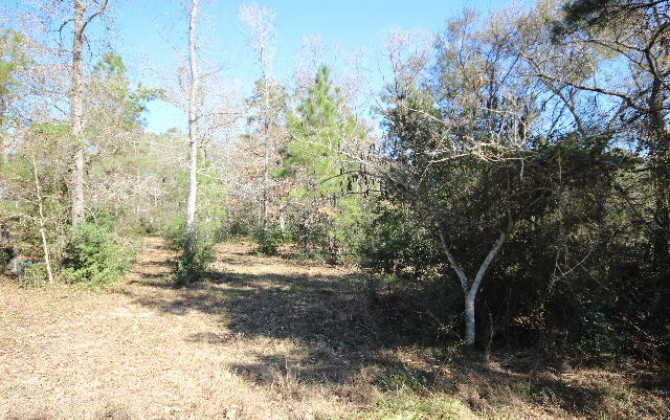magnolia land for sale
