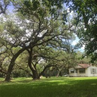 3 Bedrooms, Auction - Residential, For Sale, FM1593, 1 Bathrooms, Listing ID 1087, Ganado, Texas, United States, 77962,