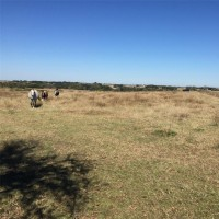 Land - Residential, For Sale, Frank Vacek Lane, Listing ID 1092, Schulenburg, Texas, United States, 78956,