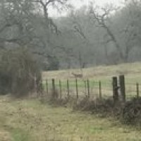 Land - Residential, For Sale, 00, Listing ID 1106, Dime Box, Lee, Texas, United States, 77853,
