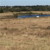 Land - Residential, For Sale, Frank Vacek Lane, Listing ID 1112, Schulenberg, Fayette, Texas, United States, 78956,